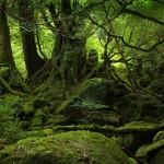 Forest-Wallpaper-For-Desktop